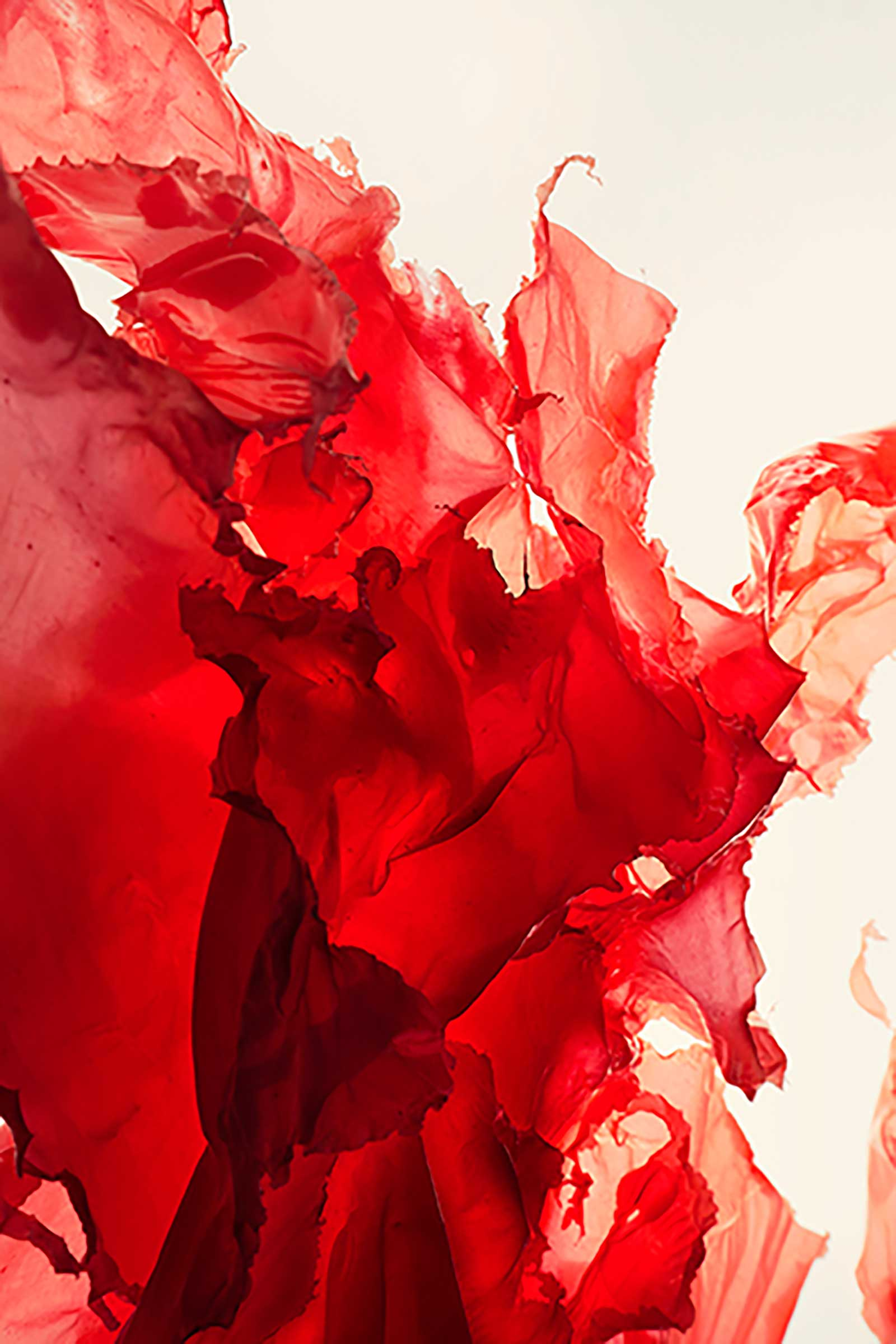 Boutique Danoise Ausstellung Flavia Schaub Basel Rot Fotografie